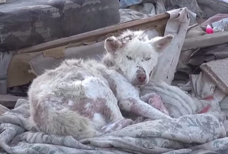 Homeless Dog Who Lived In A Garbage Site Gets Unexpected